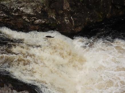 Falls of Shin